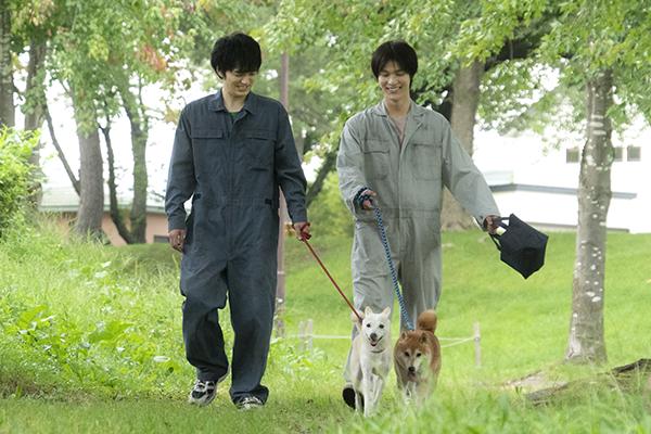 映画『犬部!』林遣都/中川大志